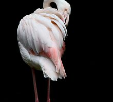 ~ Flamingo ~ by Leeo