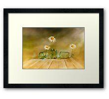 Three daisies Framed Print