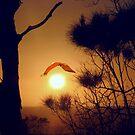 SUNRISE CRUISE by Ekascam