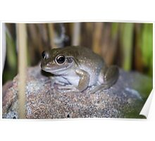 motorbike frog Poster