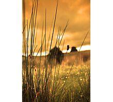 Sunset Fields Photographic Print