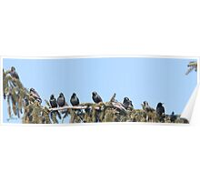 A Starling Convention Poster