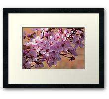 Acer Blossoms Framed Print