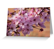 Acer Blossoms Greeting Card