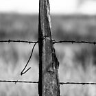 Fence Post by Gary Taylor