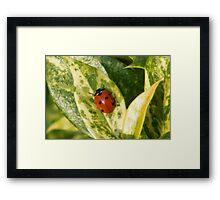 Lady Bird Framed Print
