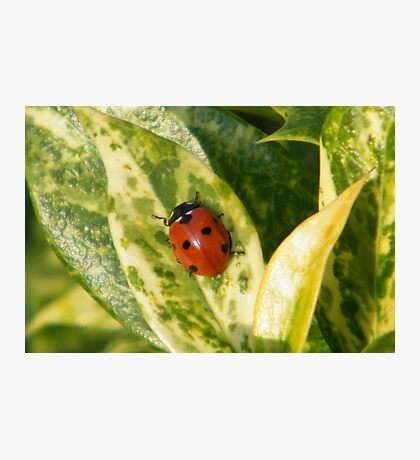 Lady Bird Photographic Print