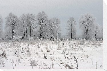 Grassland in winter time by Antanas