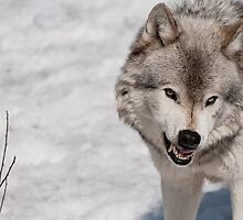 Don't Make me Angry! by Tracey  Dryka