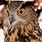 Portrait of an Eagle Owl by MKWhite