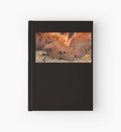 Snout to Snout Hardcover Journal