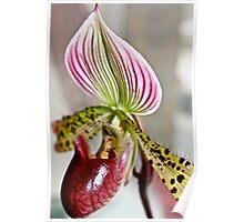 Slipper Orchid v.1 Poster