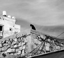 The Watchful Cat by Noam Gordon