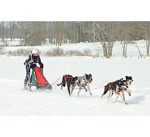 Sled dog race Photographic Print