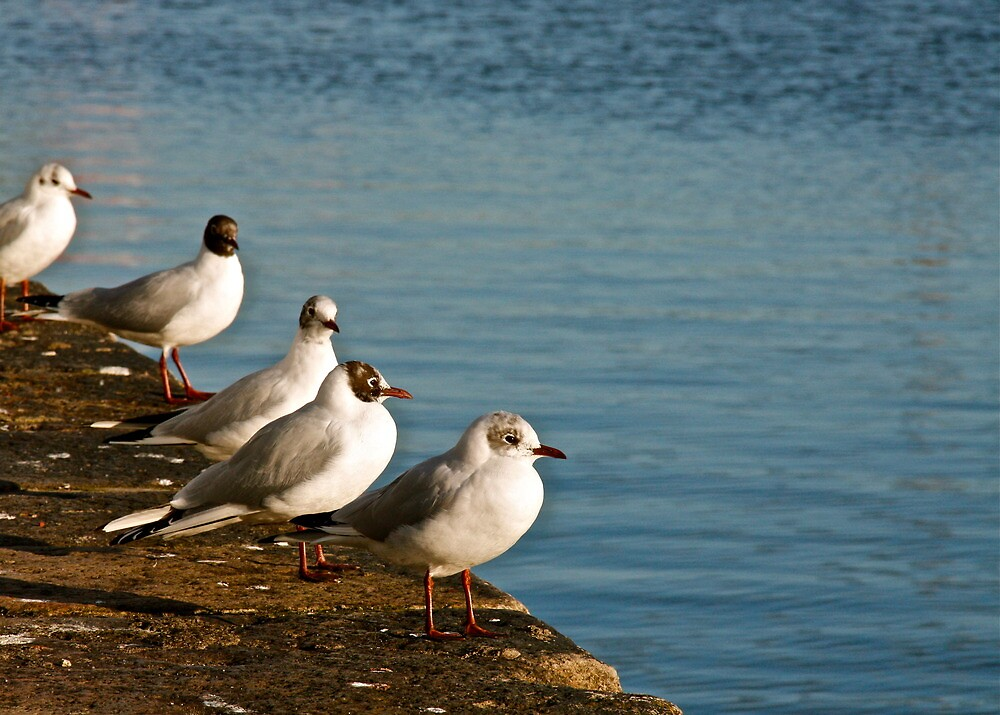 Seagulls on the pier, Dublin by heatherbyrne