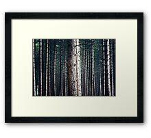 Patterns in Nature Framed Print