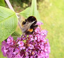 Busy as a Bee by Deb Vincent