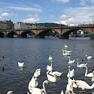 Prague - Manes bridge by Jean-Luc Rollier