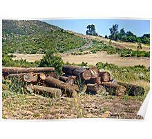 East County Landscape Poster
