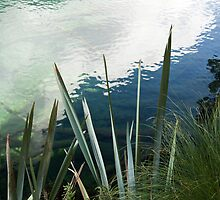Reflections in a pool - New Zealand by Robert Kelch, M.D.