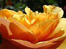 Glowing Orange Summer Rose Flower art Baslee Troutman by BasleeArtPrints