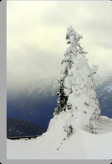 """""""A Blast of Winter"""" by Lynn Bawden"""