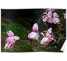 Magnificent Magnolias Poster