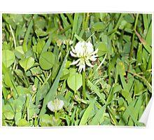 Tiny flower Poster