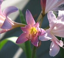 Surprise Lily by rratledge