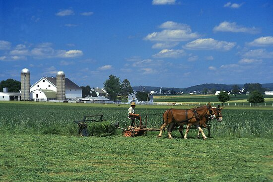 Amish Farmer in his fields by ©  Paul W. Faust