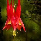 Columbine by JHRphotoART