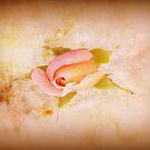 Rosebud by JacquiK