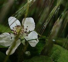 Blackberry Rain Blossom by Christine Quetola