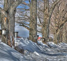 Maple Sap Collection by Ned Elliott