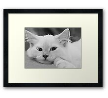 Puddy Cat Framed Print