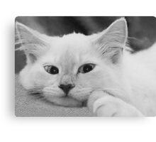 Puddy Cat Canvas Print