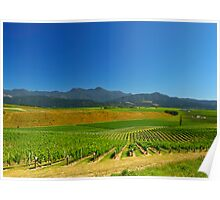 New Zealand Vineyard Poster