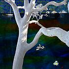 Pittwater Montage - The Angophora -  by Penny Alexander
