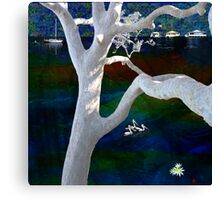 Pittwater Montage - The Angophora -  Canvas Print