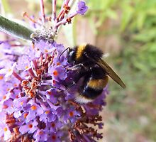 Busy Bee on a Buddleia by Deb Vincent