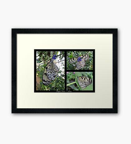 Butterfly (Asia) ~ Paper Kite Framed Print
