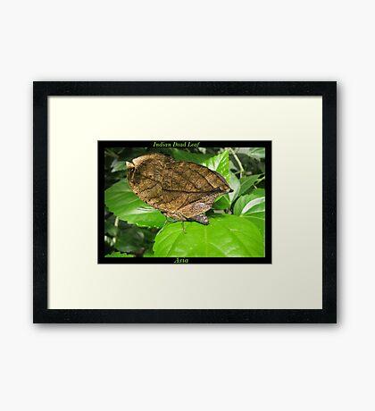 Butterfly (Asia) ~ Indian Dean Leaf Framed Print