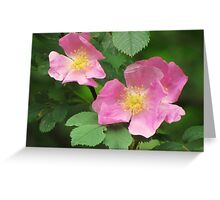 Roses Are Wild Greeting Card