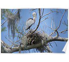 Heron Nest Poster