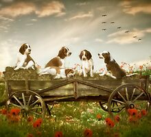 Welshie pups resting up on a hay cart by KibblyWibbly