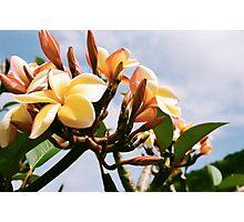 Yellow Plumeria Photographic Print