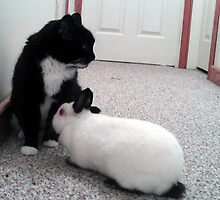 Cat and Dwarf Rabbit Meeting by CooperArt