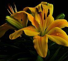 FABULOUS SPRING FLOWERS by RoseMarie747