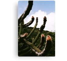 Shaggy Cactus Canvas Print
