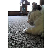 Close Up of Calico Cat Photographic Print